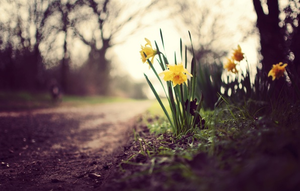 Картинка зелень, небо, трава, листья, макро, деревья, цветы, природа, земля, ветви, растения, весна, размытость, дорожка, тропинка, …