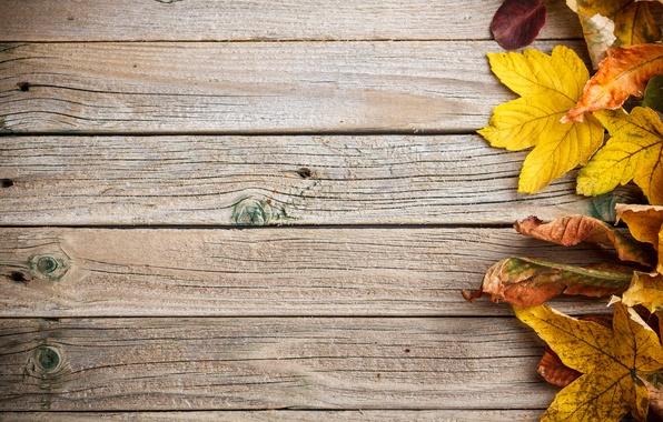 Картинка фон, дерево, colorful, wood, texture, autumn, leaves, осенние листья