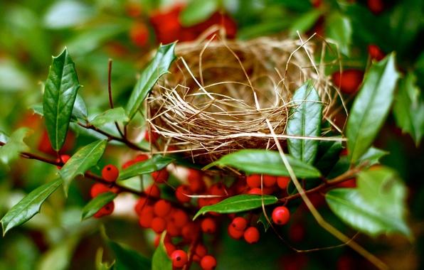 Картинка ветки, природа, гнездо