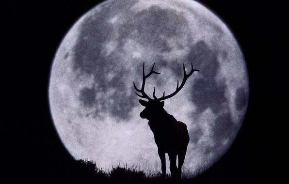 Картинка луна, олень, силуэт, рога, чёрнобелый