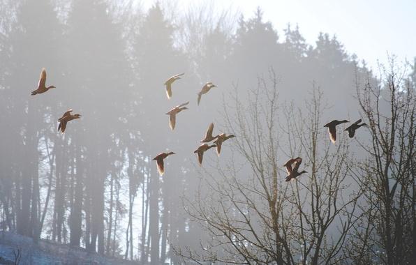 Картинка птицы, природа, туман, весна, утро