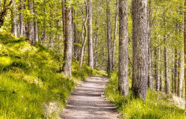 Картинка лес, пейзаж, природа, стиль, фон, текстура