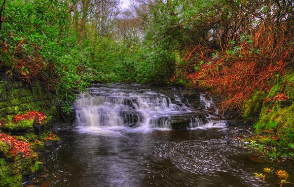 Картинка деревья, ручей, Англия, водопад, мох, hdr, каскад, кусты, пороги, Lancashire, Upper Anglezarke waterfall