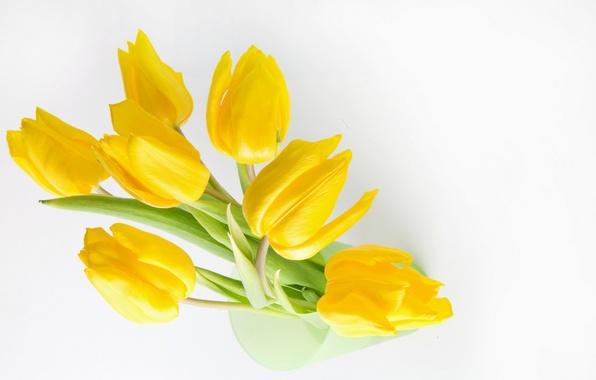 Картинка желтый, Цветы, yellow, stoc