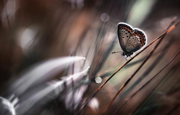 Картинка трава, бабочка, стебель, боке