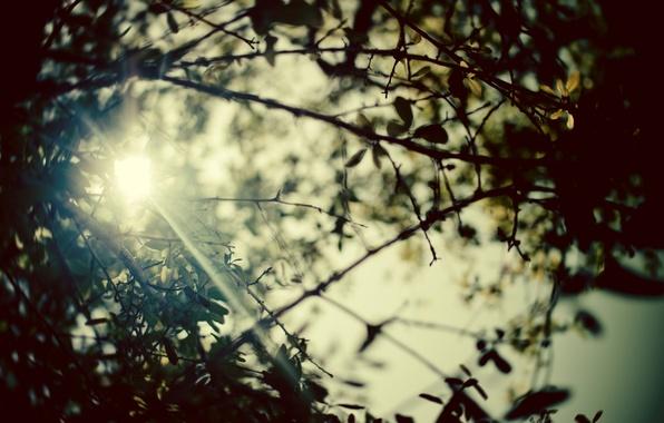 Картинка лето, листья, солнце, лучи, деревья, ветки, природа, фото, фон, ветви, обои, картинки, растения, размытость, день, …