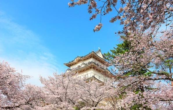 знакомства мужчины япония город осака