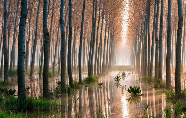 Картинка лес, деревья, болото, осины