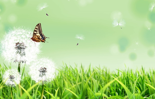 Картинка лето, трава, цветы, природа, фон, бабочка, одуванчики