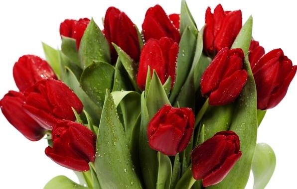 Картинка листья, цветы, яркие, красота, букет, лепестки, тюльпаны, красные, red, flowers, beauty, petals, bouquet, bright, Tulips