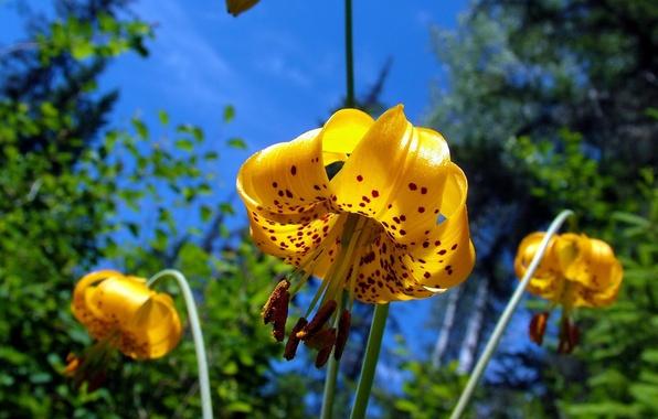 Картинка colors, nature, yellow, flowers