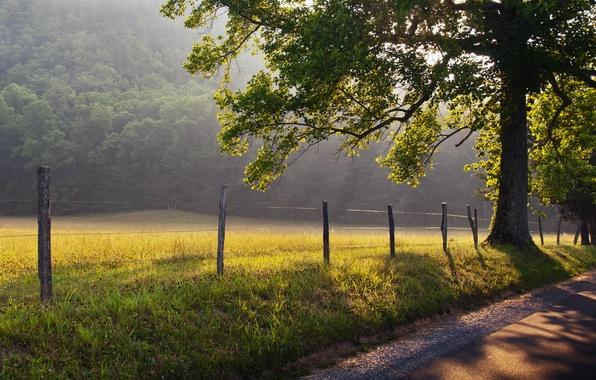 Картинка дорога, трава, солнце, лучи, природа, туман, дерево, рассвет, забор