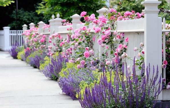 Картинка белый, лето, цветы, забор, розы, весна, ограда, желтые, Сад, красиво, розовые, синие, цветник