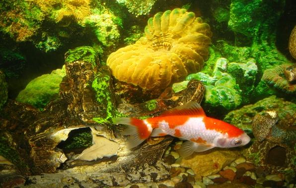 Обои картинки фото рыба дно аквариум