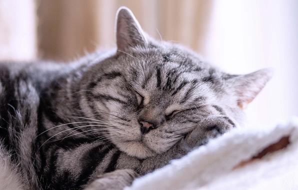Картинка кот, отдых, сон, спящий кот
