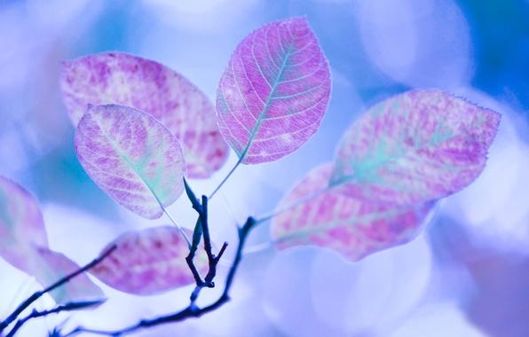 Картинка осень, листья, цвета, макро, свет, блики, обработка, ветка