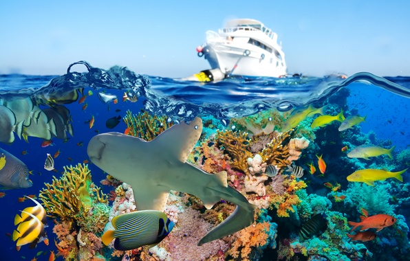 Картинка море, рыбы, акула, яхта, кораллы, подводный мир
