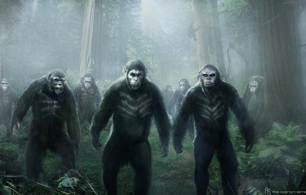 Картинка обезьяна, Цезарь, Caesar, Планета обезьян: Революция, Dawn of the Planet of the Apes