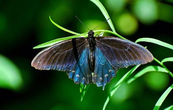 Картинка трава, бабочка, насекомое, butterfly