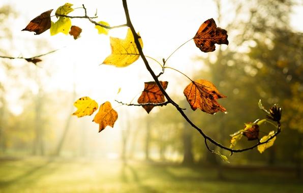 Картинка осень, листья, туман, ветка, утро