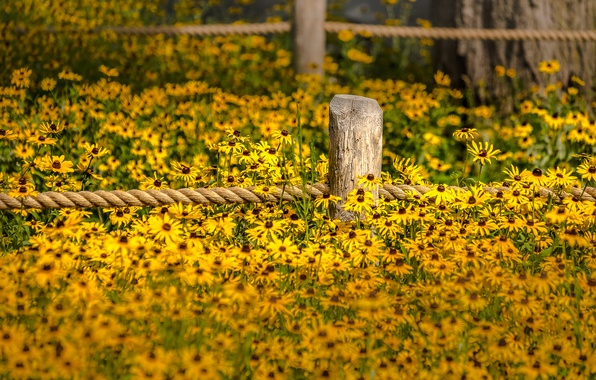 Картинка flowers, fence, garden