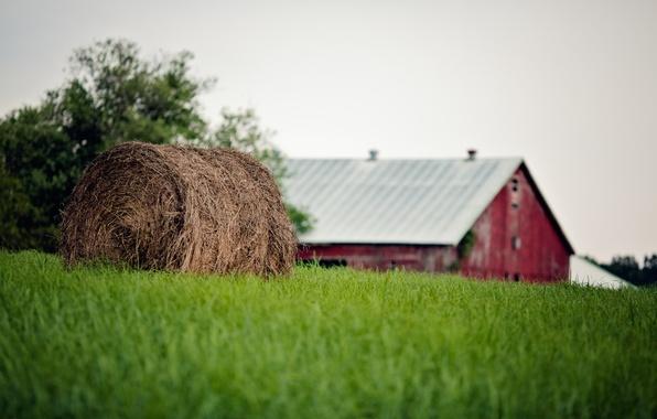 Картинка лето, трава, тюк, солома, ферма