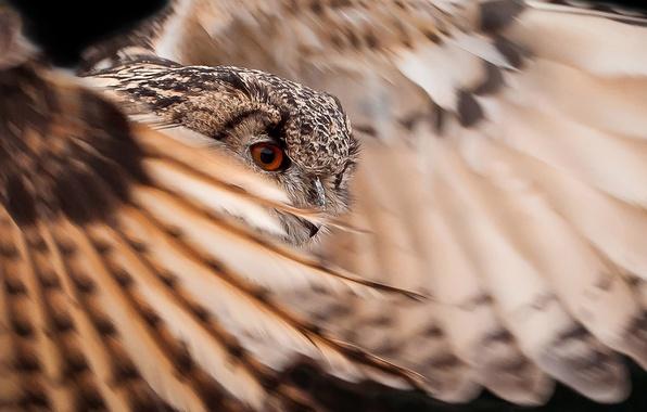 Картинка сова, птица, крылья, перья, оперение