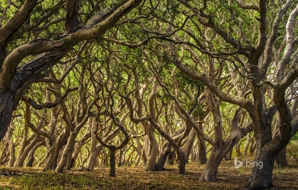 Картинка лес, деревья, ветки, заросли