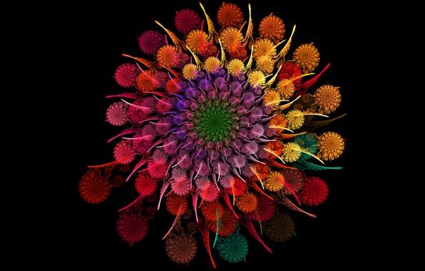 Картинка цветок, круг, радуга, букет, спираль, лепестки