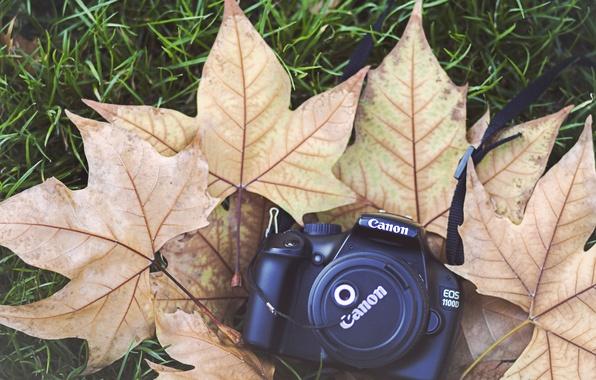 Картинка листья, камера, фотоаппарат, крышка, клен, canon