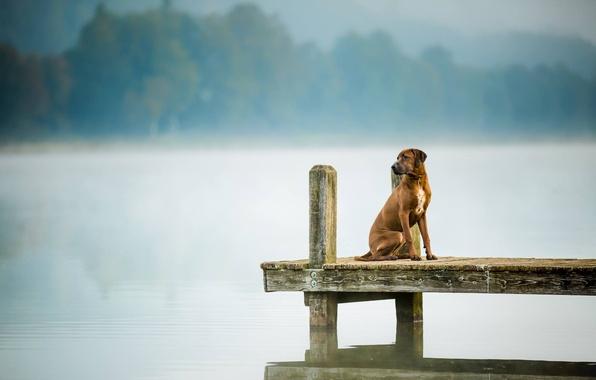 Картинка взгляд, мост, друг, собака