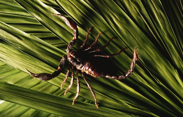 Картинка зеленый, Листья, скорпион