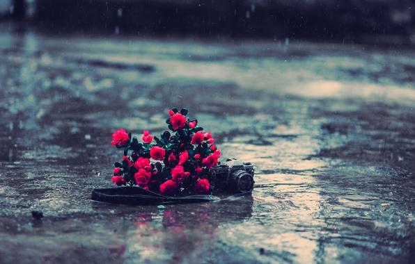Картинка асфальт, вода, цветы, фон, дождь, земля, обои, настроения, розы, фотоаппарат, красные