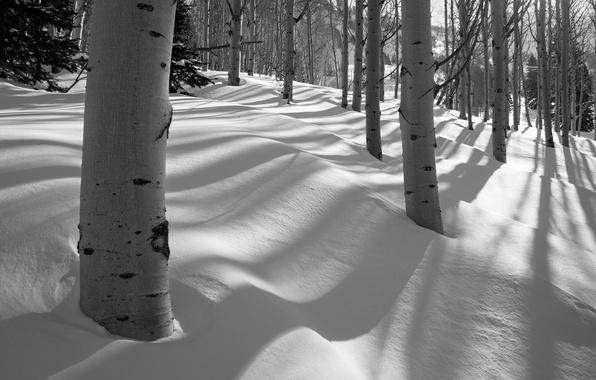 Картинка зима, лес, снег, деревья, роща, осина