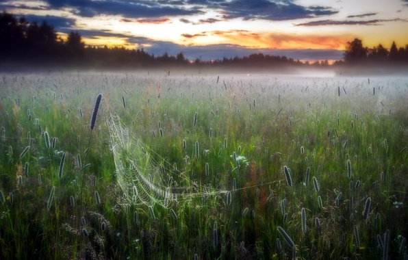 Картинка поле, туман, паутина