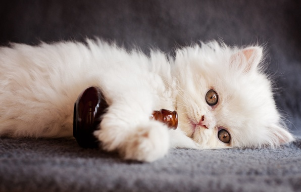 Картинка взгляд, животное, бутылка, котёнок