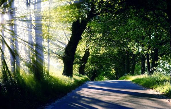 Картинка дорога, лето, трава, солнце, лучи, свет, деревья, природа, nature, кроны