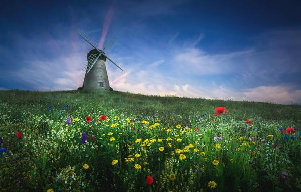 Картинка поле, лето, цветы, мельница