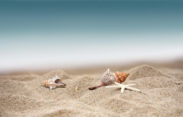 Звезды пляж топлесс 60