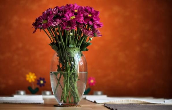 Картинка вода, цветы, фон, размытость, ваза, розовые