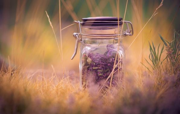 Картинка фиолетовый, трава, макро, фон, widescreen, обои, настроения, растение, размытие, банка, wallpaper, широкоформатные, background, macro, лаванда, …