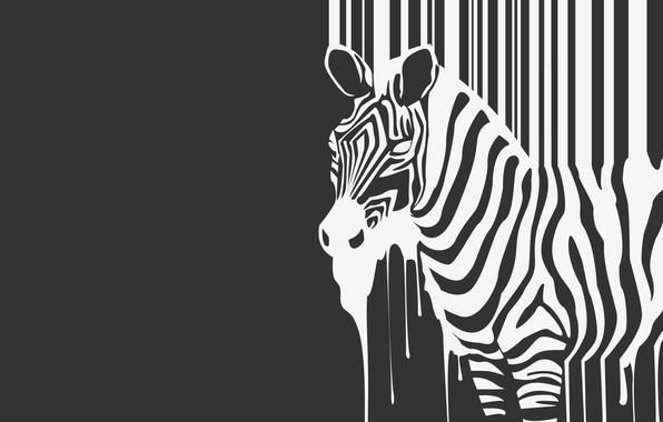 Картинка полоски, ч/б, зебра, зверь, течет, animal, zebra