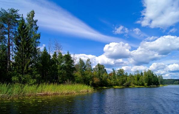 Картинка лес, лето, небо, облака, деревья, река