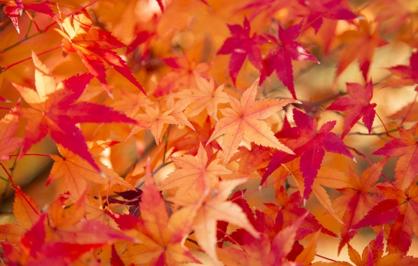 Картинка осень, листья, текстура, багрянец
