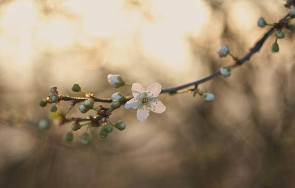 Картинка цветы, ветка, стебель, бутоны