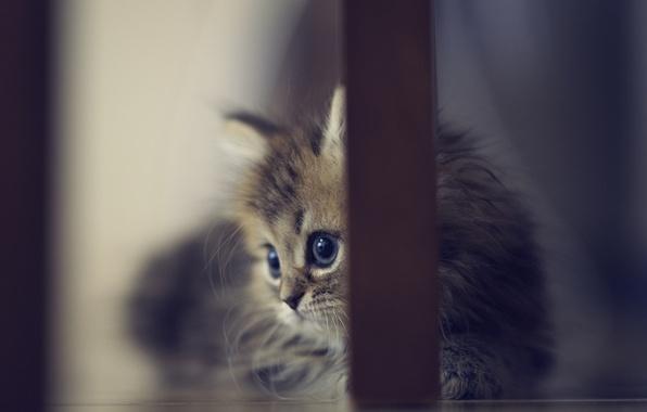 Картинка котенок, стул, пол, ножки, Daisy, Ben Torode, Benjamin Torode