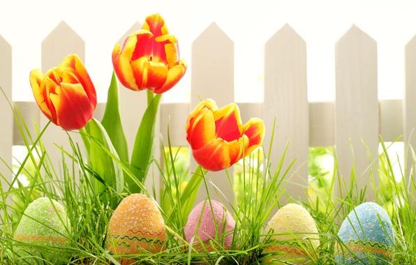 Картинка трава, цветы, природа, праздник, забор, яйца, весна, Пасха, тюльпаны, Easter