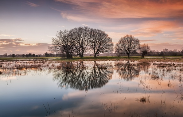 Картинка деревья, озеро, отражение, рассвет