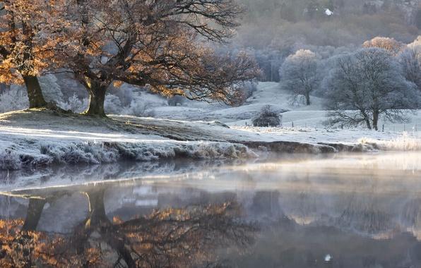 Картинка осень, туман, озеро, дерево