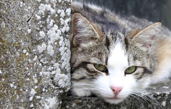 Фото обои улица, отдых, камни, кот